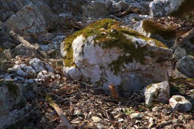 megascans_mountainslope01